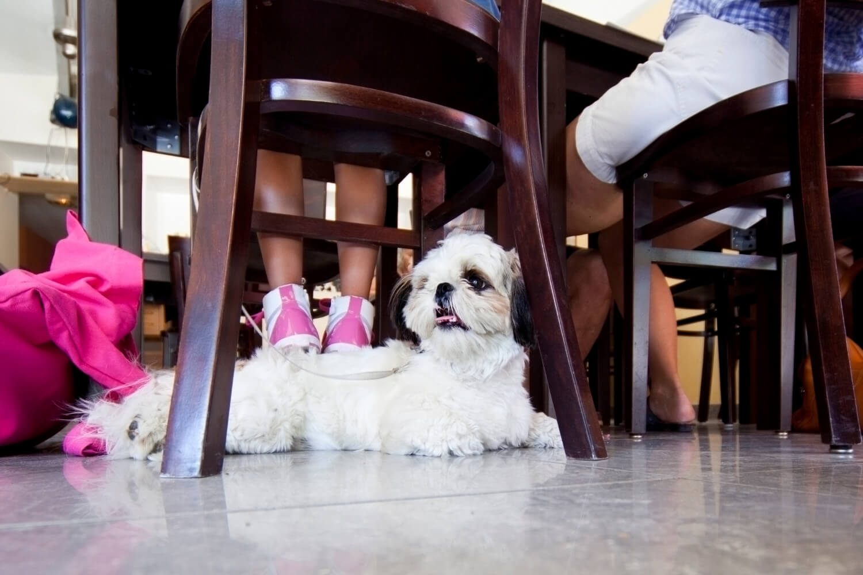 Dog under chair at restaurant for dog-friendly Chicago