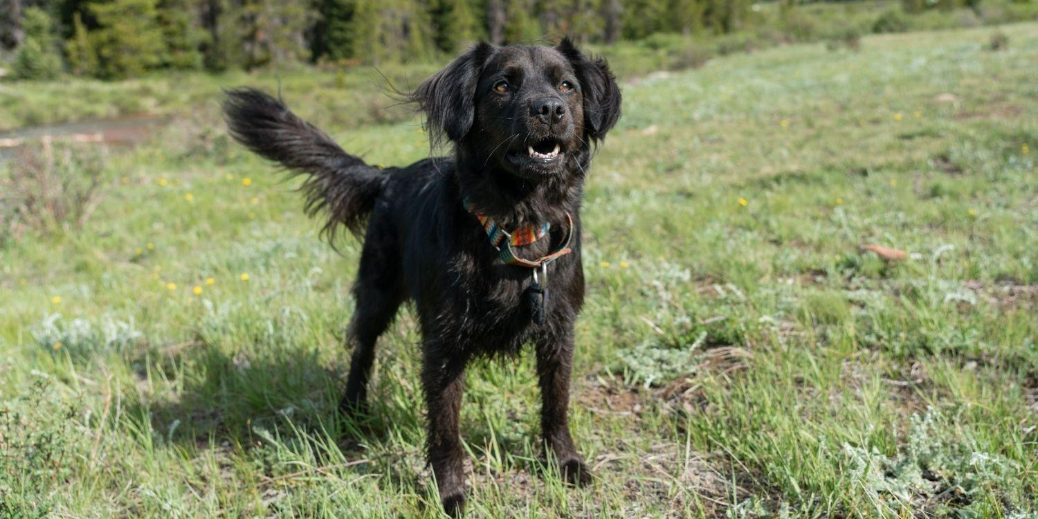 Check out these eight awesome pet-friendly hikes within striking distance of Downtown Denver. These hikes are guaranteed to bring a smile and tail wag!