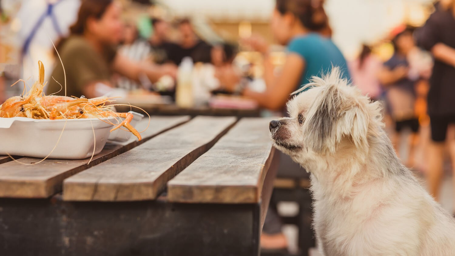 dog-at-table-looking-at-food