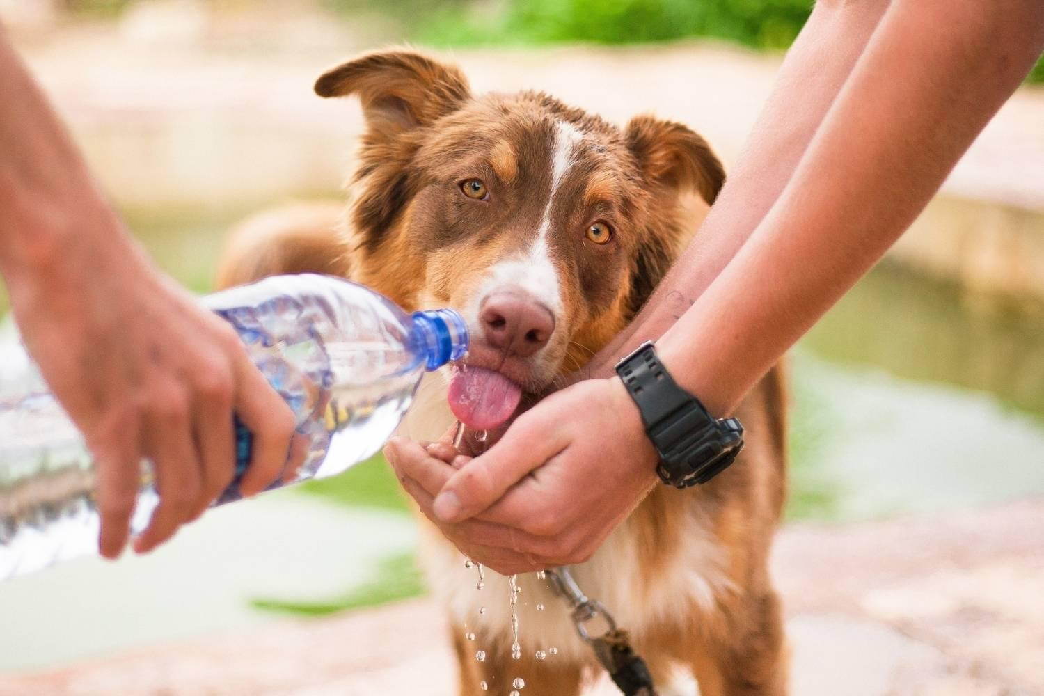 Philly Dog Parks - drinking water