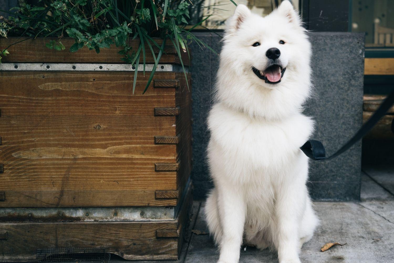 Indy dog-friendly restaurants outside
