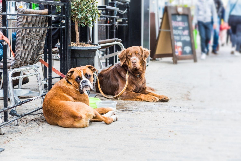 Indy dog-friendly restaurants