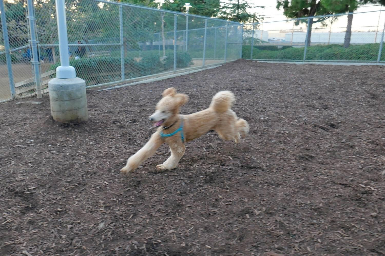 Philly dog park - running dog