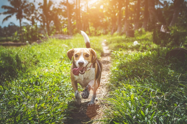 San Diego Dog Parks and Beaches