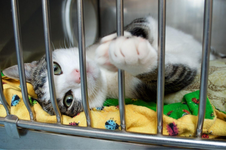 Where to adopt a pet in Austin - cat